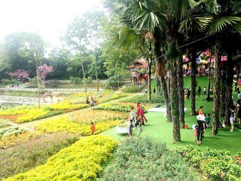 Thu Cúc Garden Việt Trì, Phú Thọ